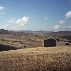 Sicilian wheat, near harvest (ADMurr) Tags: sicily sicilia italy italia wheat semolina abandoned hut rolleiflex t 35 tessar kodak ektar square mf 6x6 dad634