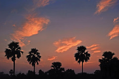 Silhouette !! (Lopamudra !) Tags: lopamudra lopamudrabarman lopa silhouette landscape sunlight sundown sunset dusk evening nightfall tree clouds cloud sky skyscape sikandra agra uttarpradesh up india twilight colour color colours colourful beauty beautiful picturesque