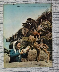 """North Korea vintage DPRK pictorial magazine circa 1966 for the Japanese market - """"Fawning"""" (moreska) Tags: north korea vintage dprk pictorial retro 1966 cute doe deer ideology 1960s woman beauty seaside nature colour outdoor sovietera history collectibles two koreas asia"""