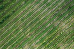 Vineyard (Seth J Dewey Photo) Tags: hollis mavic2pro newengland newhampshire sethjdeweyphotography aerial countryside drone farmland rural summer