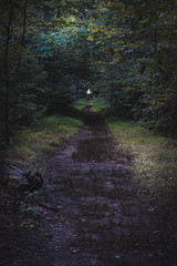 A Light at the End of the Tunnel (John Brighenti) Tags: gettysburg forest woods path pennsylvania pa nature outdoors outside trees weeds hike hiking light dark moody eerie green brown distance perspective long walking history trail sony alpha a7rii ilce7rm2 summer august tamron tamron2875 zoom lens bealpha sonyshooter