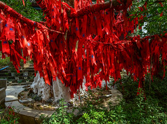 Red lucky ribbons for decoration on tree (phuong.sg@gmail.com) Tags: asia asian background beautiful china chinese color decoration design forest green greeting hang happy holiday hope hunan idea landscape love luck monument mountain national nature outdoor outside park pray prayer province red religion religious ribbon shrine temple text tied tourism travel tree wind wish wishes write zhangjiajie