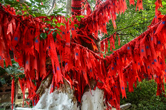 Red lucky ribbons for decoration on tree (phuong.sg@gmail.com) Tags: china beautiful asian asia background holiday color green forest happy design chinese decoration greeting hang mountain love monument nature landscape hope idea national luck hunan park red outside religious outdoor prayer religion pray province travel tree tourism temple shrine wind text ribbon tied wishes write wish zhangjiajie