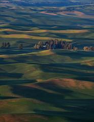 Palouse rolling hills (jeff's pixels) Tags: landscape palouse washington bird bus plane train explore nikon d850 hills green pnw pacificnorthwest