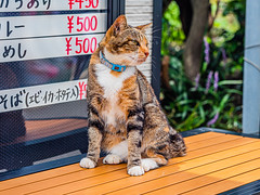 相島の猫 (S.R.G - msucoo93) Tags: 日本 九州 福岡 新宮 相島 貓 gx8 sigma56mmf14 猫島