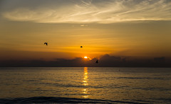 South Beach Sunrise (CraDorPhoto) Tags: canon6d sunrise landscape sea ocean atlantic sun silhouettes bird nature outdoors outside usa florida