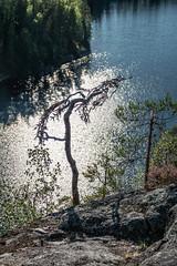 (snd2312) Tags: finland suomi summer nature luonto kesä outdoors