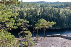 сосенки на склоне Хауккавуори (snd2312) Tags: finland suomi summer nature luonto kesä outdoors