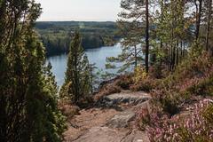 Хауккавуори. давненько здесь не была летом (snd2312) Tags: finland suomi summer nature luonto kesä outdoors