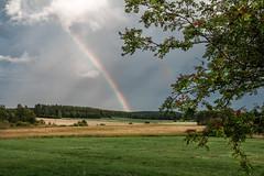попала под ливень, короткий, но сильный - зато потом радовалась радуге (snd2312) Tags: finland suomi summer nature luonto kesä outdoors