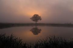 IMG_7166 (geraldtourniaire) Tags: natur nature nebel eos6d ef 24105l sonnenaufgang mittelfranken franken landschaft licht l 6d