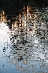 Reflexion (snd2312) Tags: finland suomi summer nature luonto kesä outdoors