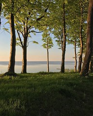 #europe #poland # #zachodniopomorskie #westpomerania #rewal #sunset #gradient #colors #green #seaside #sea #trees #grass #beach #dunes #summer #woods #nature #beautiful #light (pinus.acer) Tags: europe poland zachodniopomorskie westpomerania rewal sunset gradient colors green seaside sea trees grass beach dunes summer woods nature beautiful light