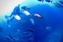 Roca Partida / Océan Pacifique (michel David photography) Tags: océan pacifique mexique
