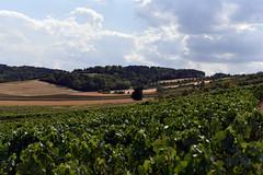 Laines-aux-Bois 2 August 2019 025 (paul_appleyard) Tags: lainesauxbois aube france august 2019