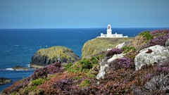 Strumble Head Lighthouse stands on Ynys Meicel (from Welsh: St. Michael's Island), also known as Strumble Head, a rocky island at the northwest corner of Pencaer area, five miles west of the town of Fishguard, in northern Pembrokeshire, Wales. Walk 208 (Glenn Birks) Tags:
