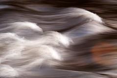 Teign Gorge, Fingle Bridge, Devon 44 (chris-parker) Tags: white deer albino fingle bridge river teign dartmoor devon stream water waterfall slow shutter speed