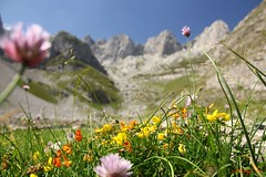 013_IMG_0964 (ChPflügl) Tags: urlaub 2019 east europa europe earth chpfluegl chpflügl christian pflügl pfluegl canon balkan august summer sommer montenegro црна гора crna gora albanien albania shqipëria liqinet e jezeres flowers blumen klee bokeh