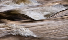 Teign Gorge, Fingle Bridge, Devon 18 (chris-parker) Tags: white deer albino fingle bridge river teign dartmoor devon stream water waterfall slow shutter speed