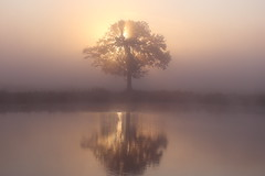 IMG_7203 (geraldtourniaire) Tags: eos6d ef natur nature sonnenaufgang franken mittelfranken nebel