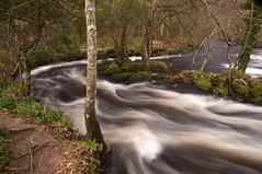 Teign Gorge, Fingle Bridge, Devon 46 (chris-parker) Tags: white deer albino fingle bridge river teign dartmoor devon stream water waterfall slow shutter speed