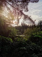 Beautiful trees. (thnewblack) Tags: huaweip30pro leicaoptics smartphone cameraphone outdoors nature sunset britishcolumbia trees sunflare lensdistortions inexplore