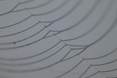 Toile d'araignée & rosée du matin 2 (CharlieSUN03) Tags: toile araignée rosée matin macro eau gouttes perles