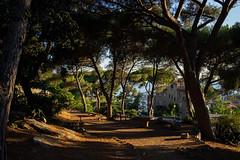 All'ombra della pineta (fedech_) Tags: sony sonyalpha sonya7 liguria nature natura beauty bellezza 35mm zeiss zeisscameralenses