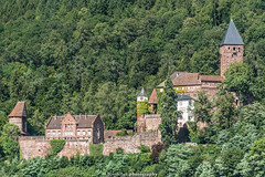 Zwingenberg Castle - August 2019 VIII (boettcher.photography) Tags: zwingenberg neckarodenwaldkreis fluss neckar valley landschaft landscape landschaftsfotografie landscapephotography wald forest view aussicht august sommer summer kurpfalz sashahasha boettcherphotography boettcherphotos 2019 castle burg zwingenburg zwingenbergcastle schlosszwingenberg schloss