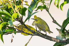 DSC07119 (Su family) Tags: sony a9 fe 600mm f4 oss 2x teleconverter wildlife bird