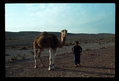 Sahara Camel Boy 2 (ubqlfulp16) Tags: sahara algeria niger cameron nigeria chad