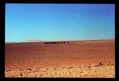 Sahara Camel Train (ubqlfulp16) Tags: sahara algeria niger cameron nigeria chad