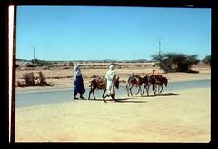 Tamanrasset Donkey (ubqlfulp16) Tags: sahara algeria niger cameron nigeria chad