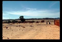 Tamanrasset Caravan (ubqlfulp16) Tags: sahara algeria niger cameron nigeria chad