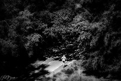 The runner (fredbervoets.com) Tags: boom gelderland hardlopen hout landschap monument monumenten nationaal natuur natuurgebied natuurmonumenten pad park recreatie veluwe wandelen wandelpad buitenshuis dal fietsstrook gebied glooiend hardloper heuvel heuvelachtig heuvellandschap heuvels joggen landelijk plant platteland posbank rheden schilderachtig veluwezoom