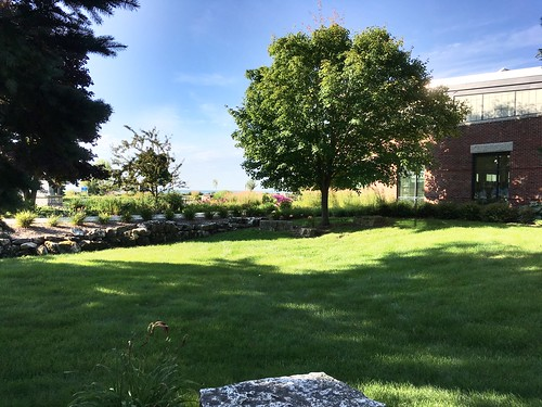 Library Gardens