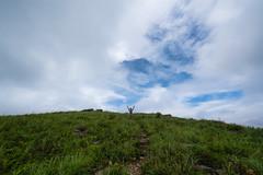 20190821a7r3_9902 (Gansan00) Tags: ilce7rm3 α7rⅲ sony fe1635f4 zeiss japan 広島県 hiroshima 日本 akiota 安芸太田町 深入山 shinnyuzan landscape snaps ブラリ旅 08月 rain trekking mountain 登山