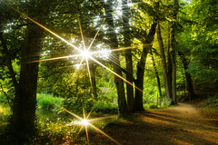 A double-sunny walk ©twe2019☼ (theWolfsEye☼) Tags: thewolfseye ermitage eremitage ermitagearlesgheim sonne sun reflektion reflection sonnenlicht sunlight sonnenstrahlen sunrays sternenfilter starlightfilter effekt effect doppelt double wege ways natur nature trees bäume schweiz switzerland