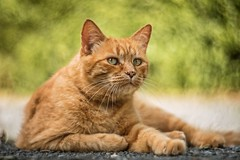 Charly ~ Petzval lens (~ Jessy S ~) Tags: nikon d750 petzval lens 85 lomography nikond750 cat cats kitty kitten cute chat chats portrait pet pets bokeh bokehness