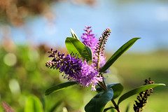 P1000149 (alainazer2) Tags: marseille provence france fiori fleurs flowers ciel cielo sky