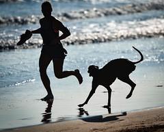 Morning run (Santoña) Tags: silhouette silueta vacaciones holidays summers galgo perro dog santoña berria playa beach ngc