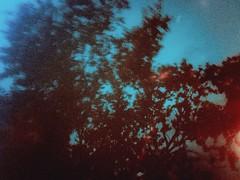 একটা আবহের ভেতরে বছরের পর বছর ভেসে থাকা নিজের ভেতরটাকে কতখানি অবশ করে দিতে পারে তা নিয়ে কে ভেবেছে। সন্ধ্যাকালীন পর্দার ওপাশে দু-বিল্ডিয়ের মাঝের জায়গাটাতে ৪০ বছরের বাসি গুমোট কংক্রিটের বাতাস, বেরুতে পারে নি। আমি কি পেরেছি? (Mridul Bangladeshi) Tags: nature sky urban asia bangladesh dhaka filmphotography filmcamera analogcamera analog analogphotography iphonecamera iphoneclick iphonephotography iphone photography art film
