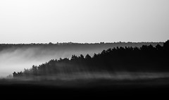 Fog on fontainebleau forest (hbensliman.free.fr) Tags: forest landscape pentax outdoor travel nature sunrise black white pentaxart france europe