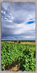 Berrwiller - Haut Rhin (jamesreed68) Tags: berrwiller église alsace hautrhin france campagne redmi note paysage nature vignoble