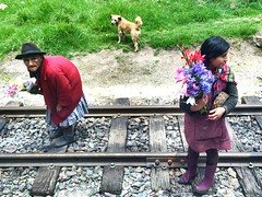 Somewhere between Cusco and Machu Picchu. (rfellipe) Tags: peru inca inka machupicchu perurail old lady miss travel world people cusco cuzco vacation trip flower dog colors tourist viagem trem linha traveler life person velhinha senhora vendedora ambulante ferrea train corcunda hat