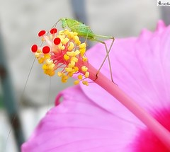 MACRO-Flor con insecto. (In Dulce Jubilo) Tags: macro bokeh fotografía flor flores flowers colors colores naturaleza nature insecto insect animal animals photography espagne españa spain spanien