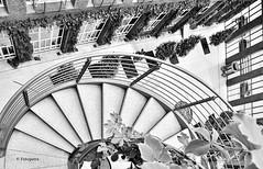 Hier oben war mir echt schwindelig.... (petra.foto busy busy busy) Tags: fotopetra canon eosrp hamburg germany treppe stairs schwarzweis black white monocrom wendeltreppe zürichhaus bürohaus architektur vonoben