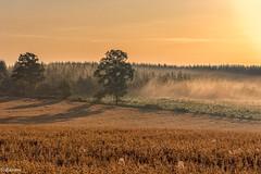 19082019-DSC_0040 (vidjanma) Tags: taverneux arbres brume matin ompres