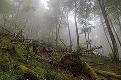 190818 AKOMENDI-GORRAMENDI 003 (MAVARAS) Tags: bosque forest verde green arbol tree niebla fog mavaras nikon 5600 d5600 sigma 1770