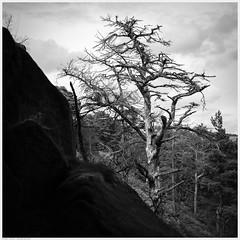 _DSC2664 (alexcarnes) Tags: roaches hen cloud leek staffordshire tree alex carnes alexcarnes nikon d850 sigma f14 art 50mm